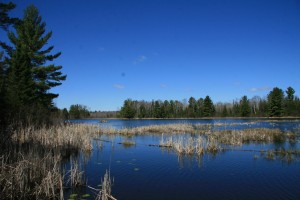 A large beaver pond on Koernet Creek hosts nesting swans and many other species of waterfowl.